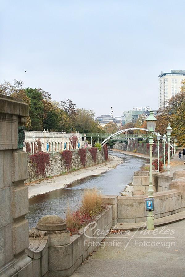 Möwen im Wiener Stadtpark im Herbst