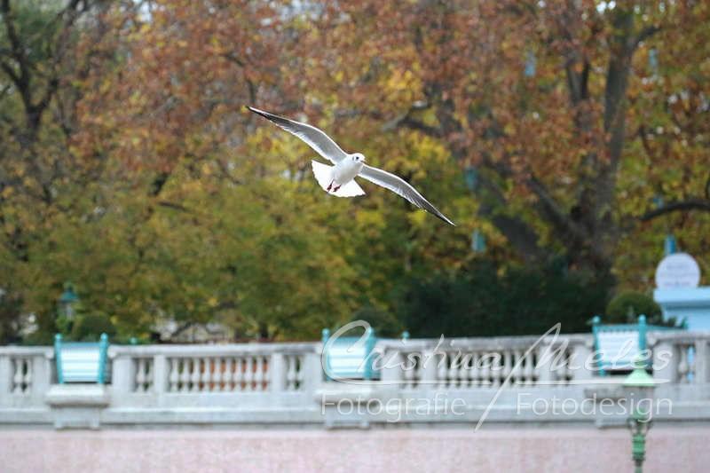 Möwen kreisen im Wiener Stadtpark umher
